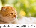 สัตว์,สัตว์ต่างๆ,แมว 40430219