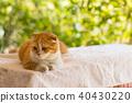 สัตว์,สัตว์ต่างๆ,แมว 40430220