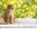 สัตว์,สัตว์ต่างๆ,แมว 40430223