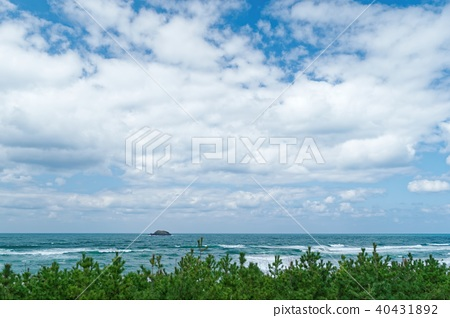 Tottori whale island 40431892