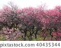 field, plum grove, bloom 40435344
