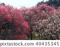 field, plum grove, bloom 40435345