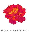 花朵 花 花卉 40435465
