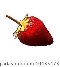 strawberry isolated illustration 40435473