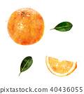 fruit orange watercolor 40436055