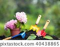 Tools garden soil and  hydrangea flower in flower  40438865