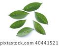 foliage, leaf, leaves 40441521