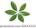 foliage, leaf, leaves 40441524