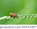Natural background love making ladybugs couple on  40442067