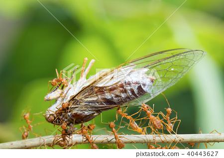 Ant action standing.Ant bridge unity team,Concept  40443627