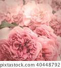 romantic pink roses 40448792
