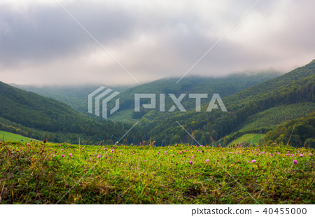 landscape with fields and  forest on hillside 40455000
