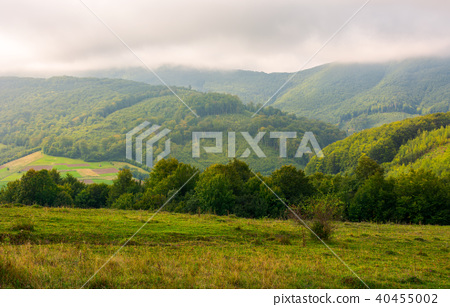 landscape with fields and  forest on hillside 40455002