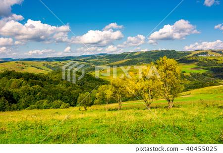 row trees a hillside in autumn 40455025