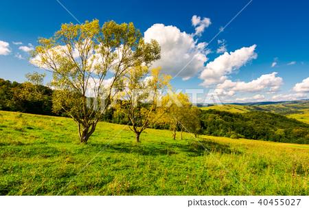 row trees a hillside in autumn 40455027