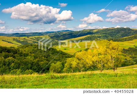 row trees a hillside in autumn 40455028