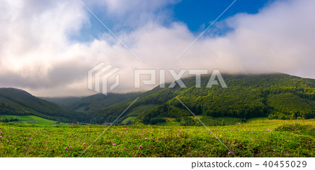 landscape with fields and  forest on hillside 40455029