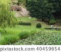 green leaves, pond, lagoon 40459654