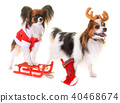 little dogs and christmas 40468674