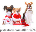 little dogs and christmas 40468676