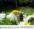 虫子 漏洞 昆虫 40469002