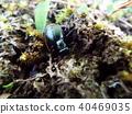 虫子 漏洞 昆虫 40469035