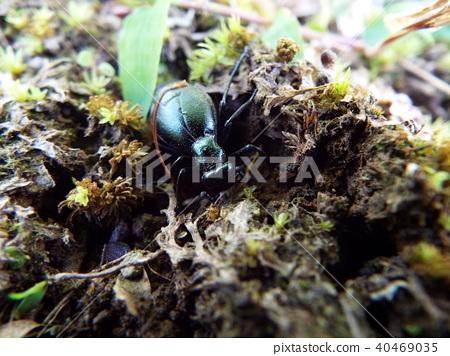 곤충, 벌레, 클로즈업 40469035