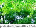 Green maple leaf (backlight) 40473246