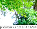 Green maple leaf (backlight) 40473248