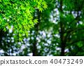 Green maple leaf (backlight) 40473249