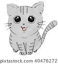 고양이 (아메리칸 쇼트 헤어) 40476272