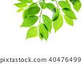 ภาพสีเขียวสดใหม่ 40476499