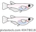 ปลาคิลลี่,ปลา,ปลาน้ำจืด 40478618