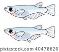 ปลาคิลลี่,ปลา,ปลาน้ำจืด 40478620