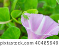 갯메 꽃 메뚜기 40485949