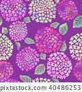 hydrangea, flower, flowers 40486253