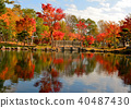 Japanese garden of autumn leaves 40487430