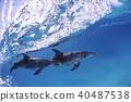 바하마에서 돌고래의 쌍 40487538