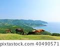 ม้า,ทุ่งหญ้า,ธรรมชาติ 40490571