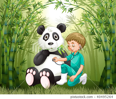 Veterinarian Doctor And Panda in Bamboo Forest 40495264
