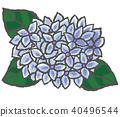 수국, 자양화, 꽃 40496544