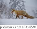 北狐 40496591