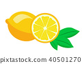 Fresh lemon fruits vector illustrations 40501270