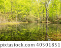 신록, 봄, 강 40501851