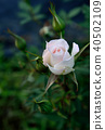 Elegance 40502109