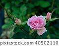 Bloom 40502110