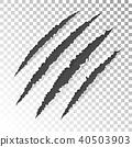 scratch claw tiger 40503903