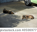 Two cats lying on the parking lot 40506977