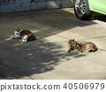 Two cats lying on the parking lot 40506979