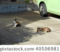 Two cats lying on the parking lot 40506981